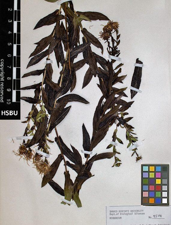 HSBU 85191