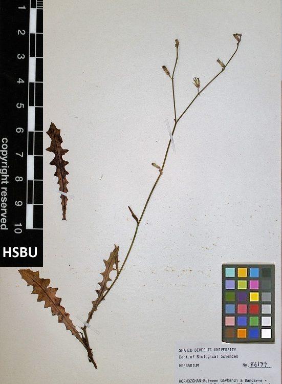 HSBU 86179