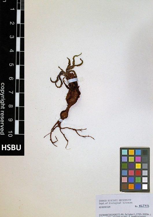HSBU 862733