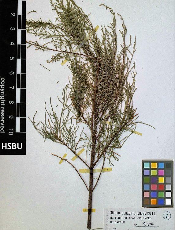 HSBU 987