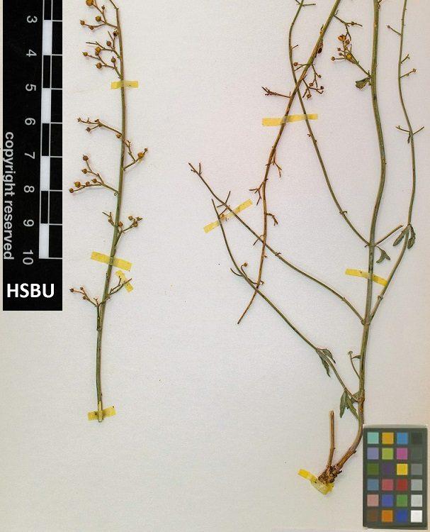 HSBU no. 471-a
