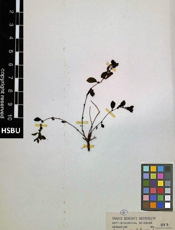 HSBU no.783